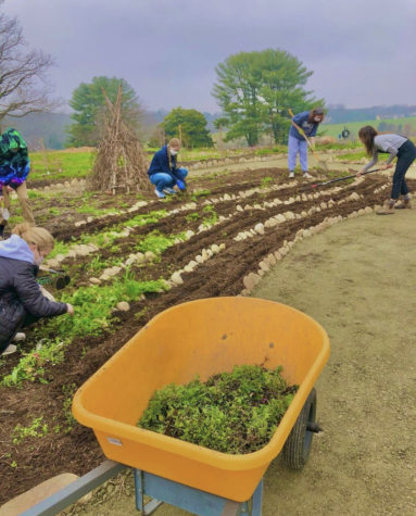 Young Ecos members volunteering at community gardens. Photo provided by Ella Klein